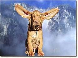 Profilový obrázek Gabio
