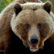 Profilový obrázek Grizly