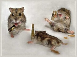 Profilový obrázek Hamster88