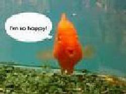 Profilový obrázek happy fish