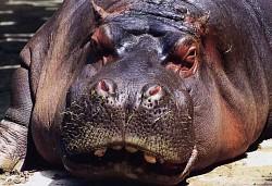 Profilový obrázek Hroch
