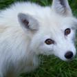 Profilový obrázek iveta.vixen