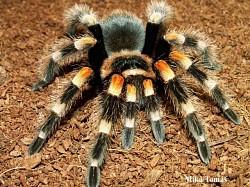 Profilový obrázek Arachno