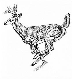 Profilový obrázek Jelenstylez