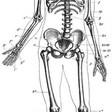 Profilový obrázek Jenom kostra člověka xD