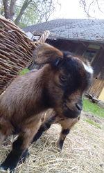 Profilový obrázek Kezi