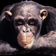 Profilový obrázek Kamil Freud