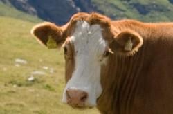 Profilový obrázek Kawis