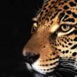 Profilový obrázek kočina