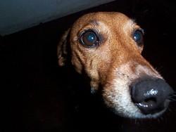 Profilový obrázek Lucyna