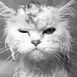 Profilový obrázek MesReady
