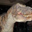 Profilový obrázek Mirosaurus