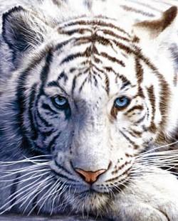 Profilový obrázek M.x.K.