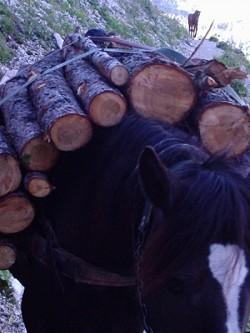 Profilový obrázek orango