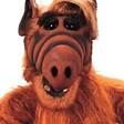 Profilový obrázek Alfus