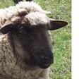 Profilový obrázek Parmi