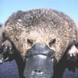 Profilový obrázek pavlinaG