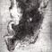 Profilový obrázek tulenipani