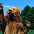 Profilový obrázek Grizzly