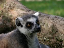 Profilový obrázek Šmox