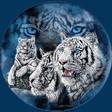 Profilový obrázek tigerec97
