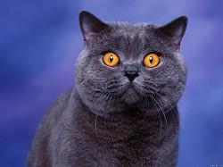 Profilový obrázek TrueMetalMan