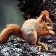 Profilový obrázek veveruška