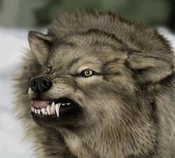 Profilový obrázek volfy