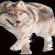Profilový obrázek Wolfík