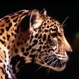 Profilový obrázek xinuška