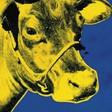 Profilový obrázek yellow cow