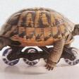 Profilový obrázek želva