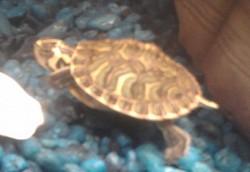 Profilový obrázek Želvis